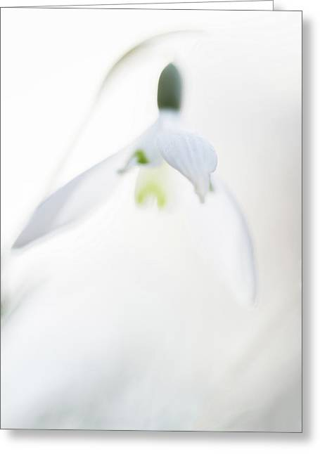 Snow Drops Wild Flowers Abstract Greeting Card by Dirk Ercken