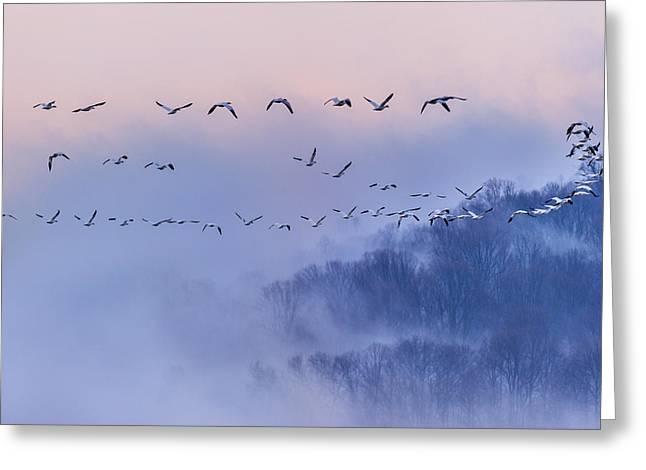 Snow Geese Greeting Card by Austin Li