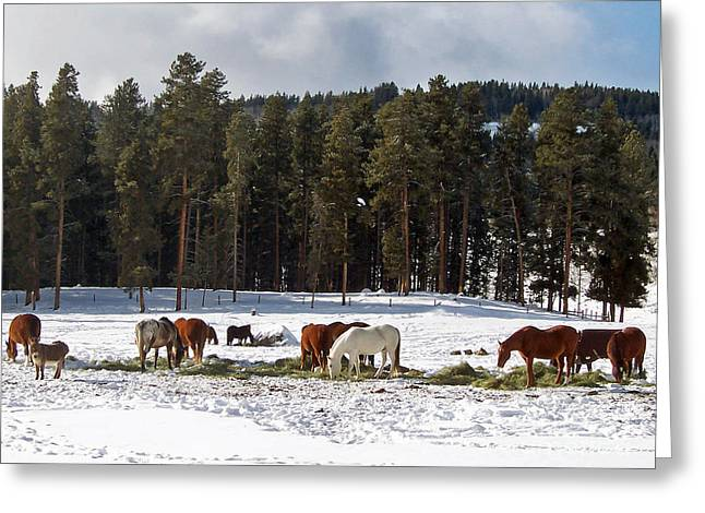Grazing Snow Greeting Cards - Snow Horses Greeting Card by Toula Mavridou-Messer