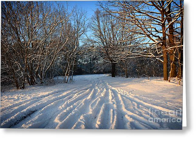 Snow Landscape 4 Greeting Card by SK Pfphotography