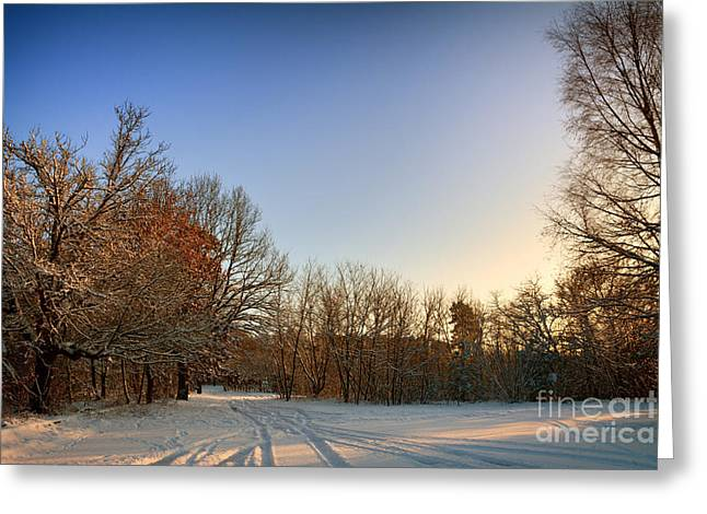 Snow Landscape 5 Greeting Card by SK Pfphotography