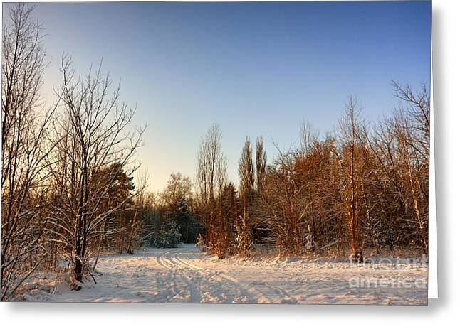 Snow Landscape 8 Greeting Card by SK Pfphotography