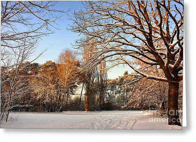 Snow Landscape 9 Greeting Card by SK Pfphotography