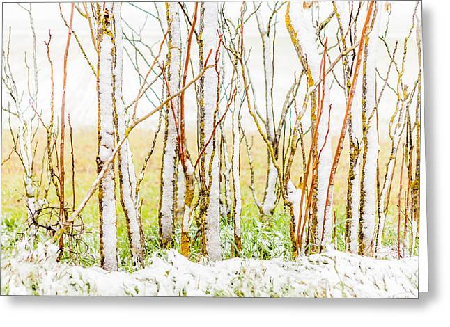 Christmas Art Greeting Cards - Snow Landscape Greeting Card by Montse Figueiro