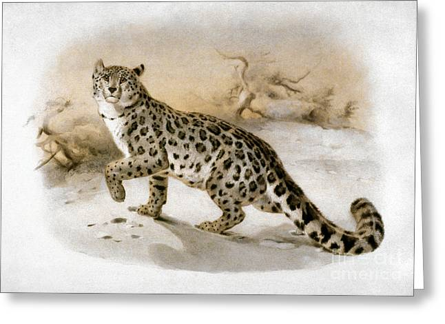 Artflakes Greeting Cards - Snow Leopard Greeting Card by Granger