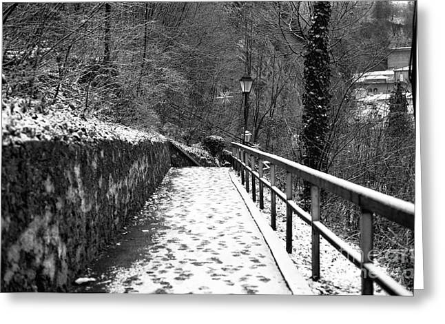 White Snow On Trees Greeting Cards - Snow on the Path in Salzburg Greeting Card by John Rizzuto
