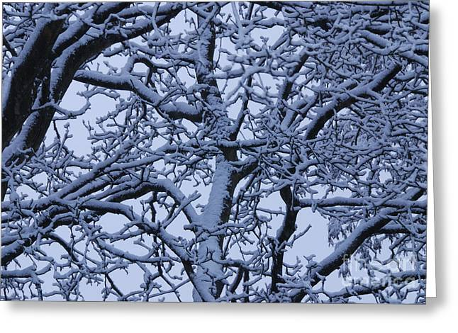 Winter Storm Greeting Cards - Snow on Tree Branches Greeting Card by Marv Vandehey