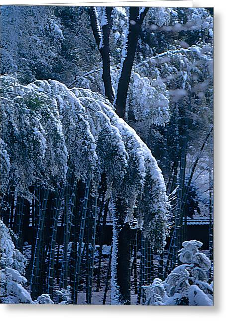 Kyoto Mixed Media Greeting Cards - Snow on Trees Collection Greeting Card by Martial Arts  Fine Art