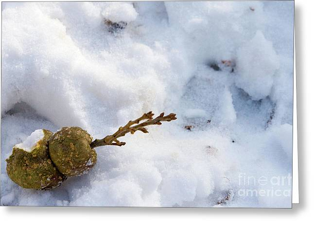 Wildlife Celebration Greeting Cards - Snow sprouts Greeting Card by Alan Look