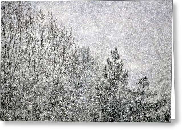 Snow Squawl Greeting Card by Laura Mountainspring