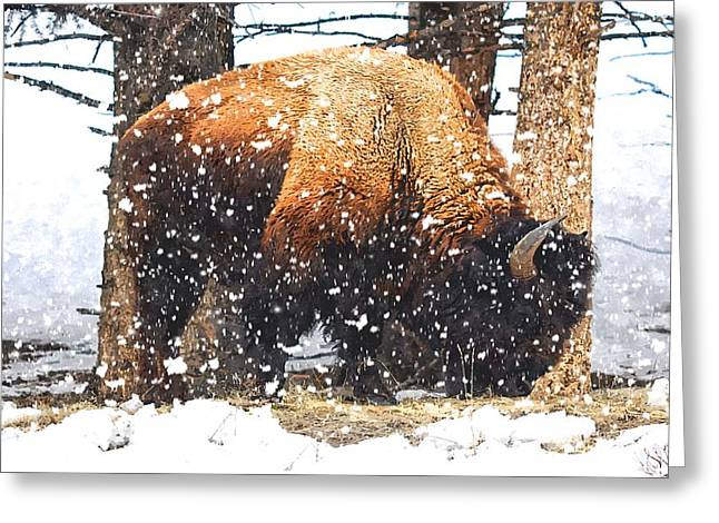 Grazing Snow Greeting Cards - Snow Storm Greeting Card by Image Takers Photography LLC - Carol Haddon