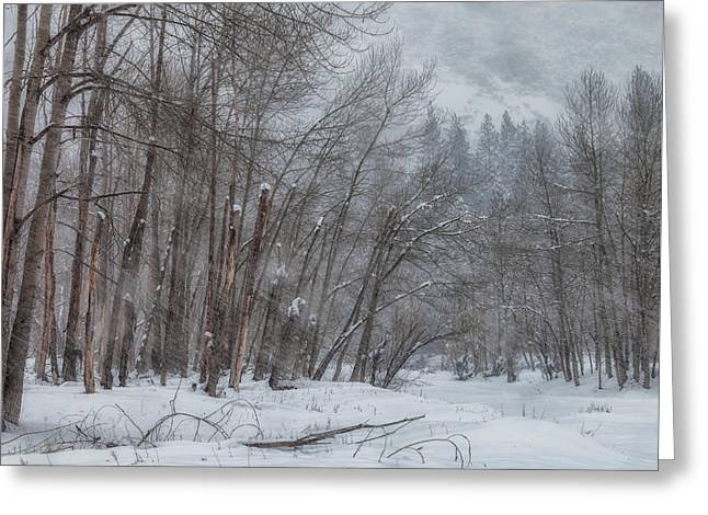 Winter Storm Greeting Cards - Snow Storm Greeting Card by Jonathan Nguyen