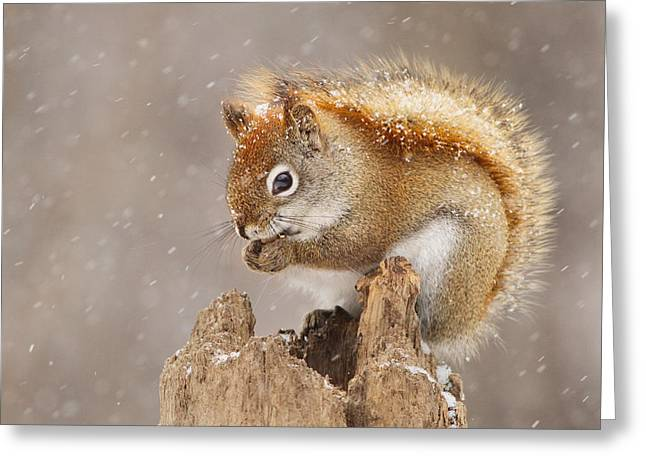 Winter Storm Greeting Cards - Snow Storm Greeting Card by Mircea Costina