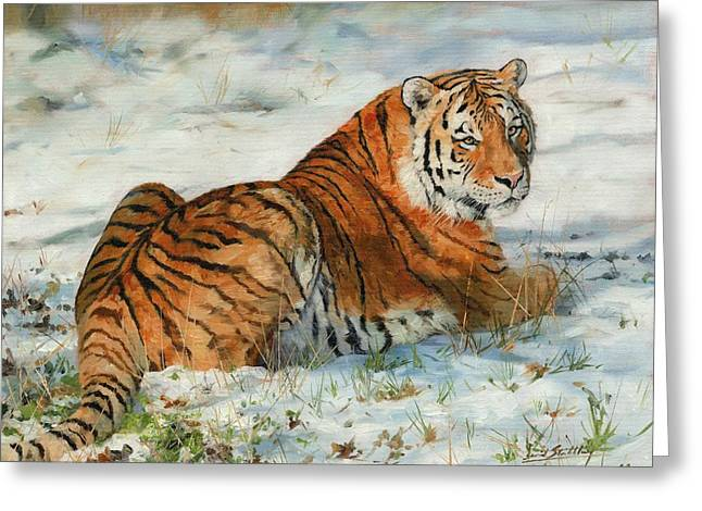 Chinese Tiger Greeting Cards - Snow Tiger Greeting Card by David Stribbling