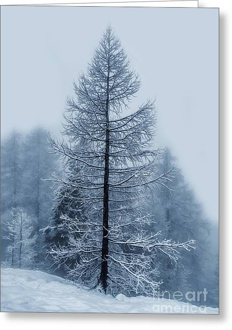 Swiss Photographs Greeting Cards - Snow Tree Greeting Card by Omar Dakhane