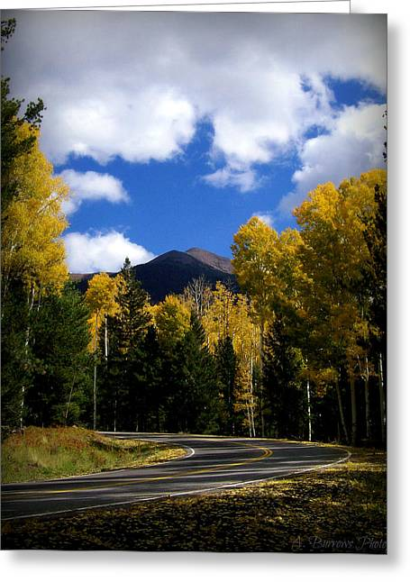 Snowbowl Greeting Cards - Snowbowl Aspens Greeting Card by Aaron Burrows