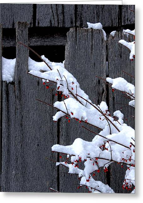 Berry Greeting Cards - Snowed on Christmas Greeting Card by John McDonald