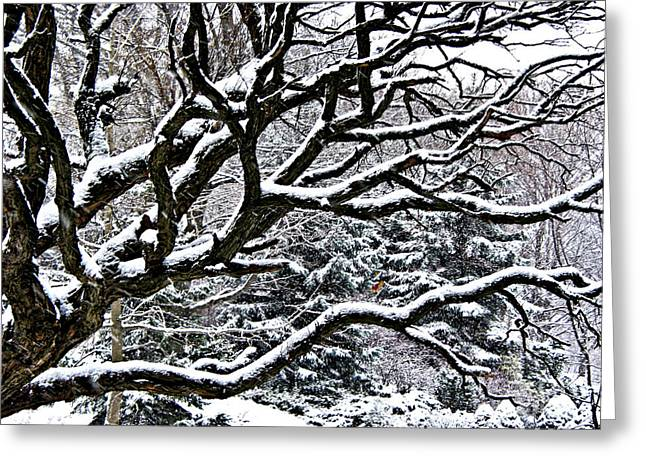 Snowflake Greeting Cards - Snowfall and tree Greeting Card by Elena Elisseeva