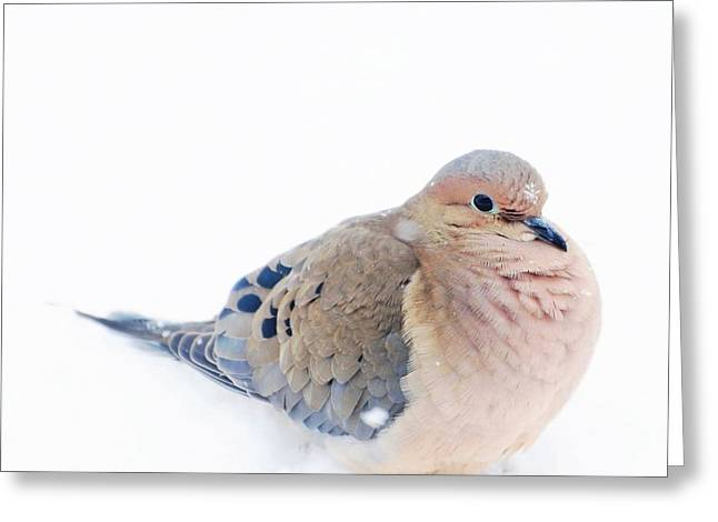 Gift Ideas For Him Greeting Cards - Snowflakes on Mourning Dove Greeting Card by Mingtaphotography