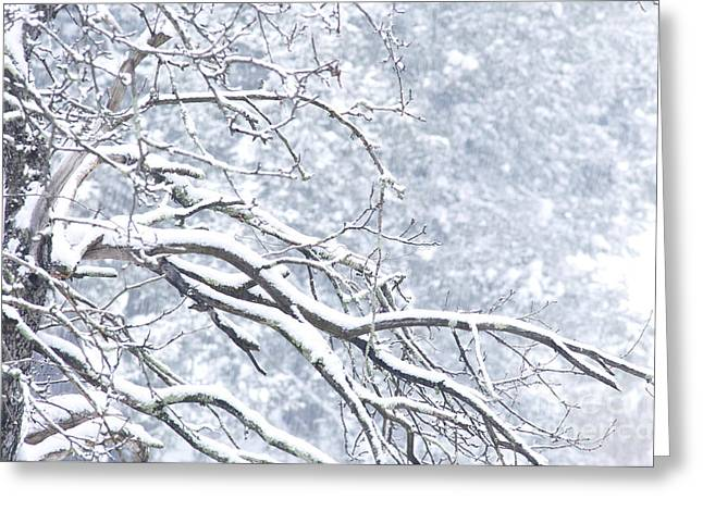 Allegheny Greeting Cards - Snowing Greeting Card by Thomas R Fletcher