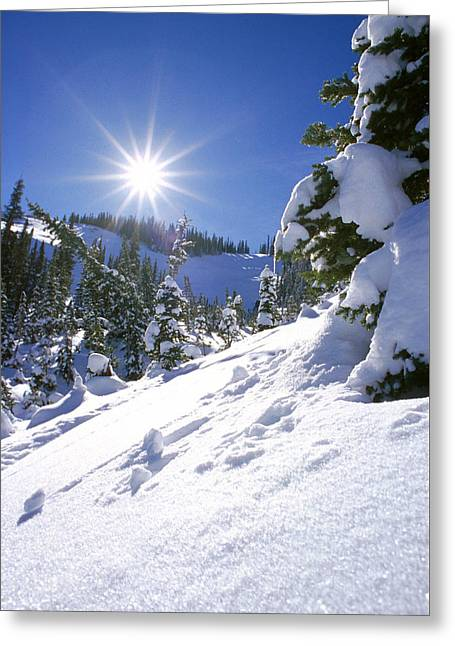 Skiing Christmas Cards Greeting Cards - Snowscape With Bright Sun Greeting Card by American School