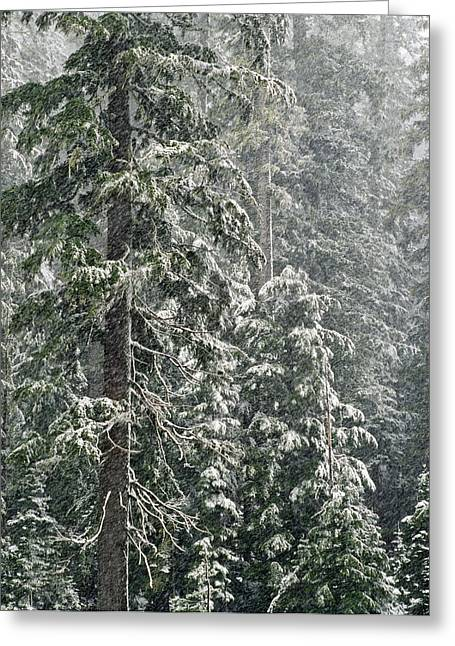 Snowstorm Greeting Cards - Snowstorm in Mount Hood National Forest Greeting Card by Greg Vaughn - Printscapes