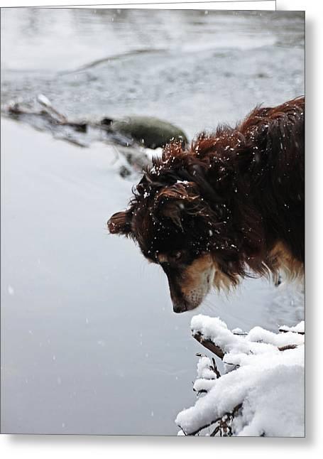 Best Friend Greeting Cards - Snowy Aussie Greeting Card by Debbie Oppermann