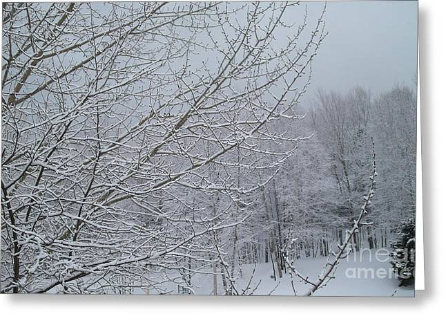 Winter Storm Greeting Cards - Snowy Branches Greeting Card by Gina Sullivan