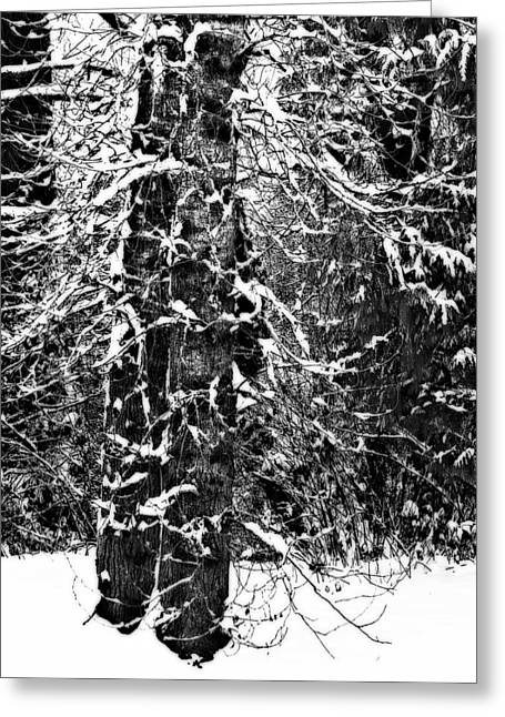 Snow Scenes Greeting Cards - Snowy Branches Greeting Card by Marion McCristall