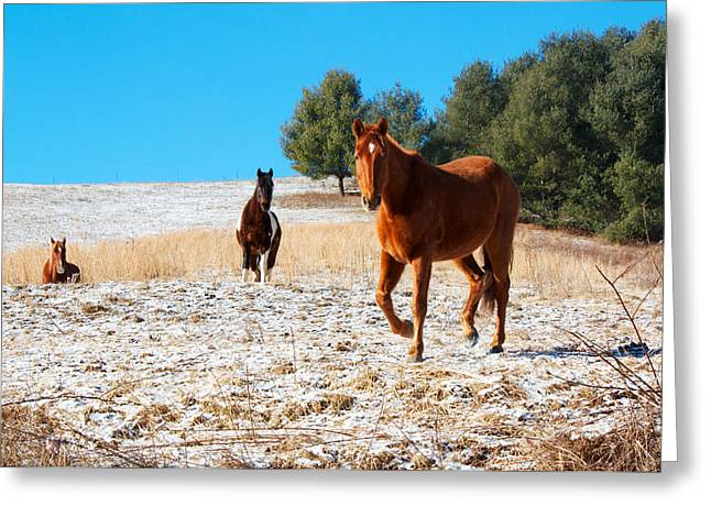 Snowy Day Horse Pasture Greeting Card by Orange Cat Art