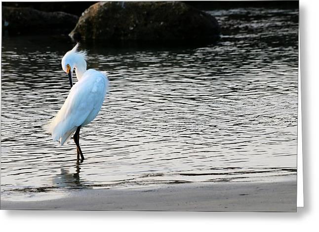 Water Fowl Greeting Cards - Snowy Egret Greeting Card by Carol R Montoya