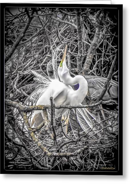 Snowy Night Greeting Cards - Snowy Egret Heron Greeting Card by LeeAnn McLaneGoetz McLaneGoetzStudioLLCcom