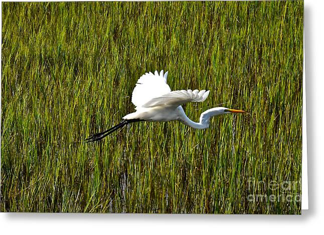 Nature Center Pond Greeting Cards - Snowy Egret In Flight Charleston SC Greeting Card by Joan Kaplan