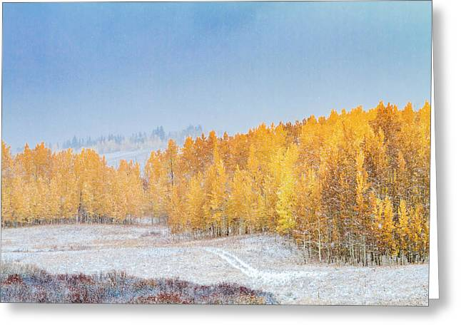 Snowy Fall Morning In Colorado Mountains Greeting Card by Teri Virbickis