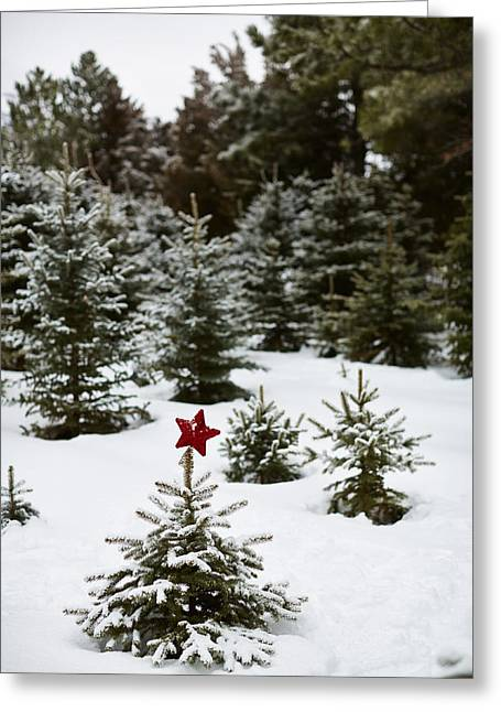 Winter Photos Greeting Cards - Snowy Forest And Small Tree In Front Greeting Card by Gillham Studios