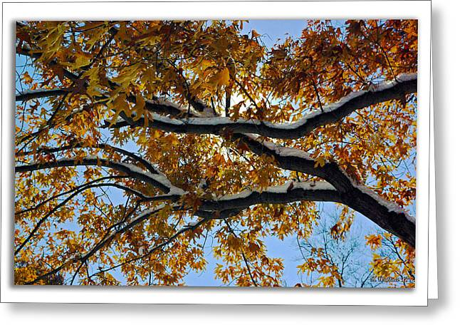 Overhanging Snow Greeting Cards - Snowy Oak Greeting Card by Brian Wallace