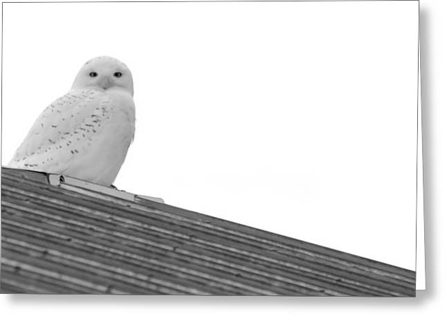 Catherine White Greeting Cards - Snowy Owl in Balack and White Greeting Card by Tracy Winter