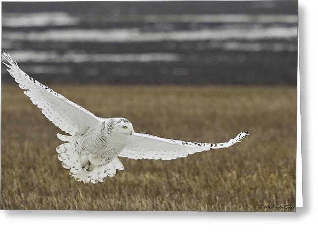 Snowy Owl In Flight Greeting Card by Michaela Sagatova