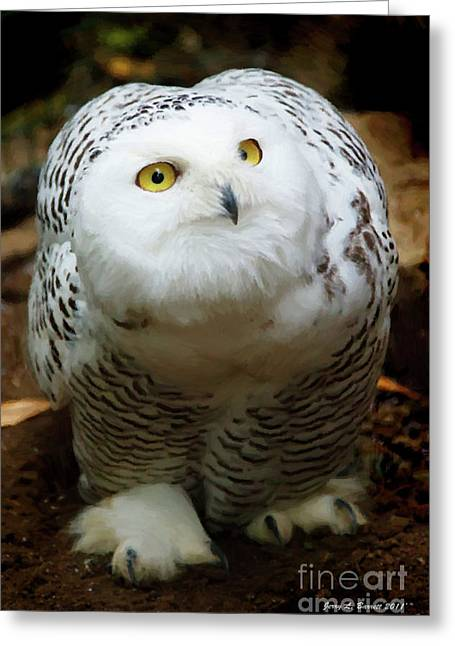 Snowy Night Night Greeting Cards - Snowy Owl Greeting Card by Jerry L Barrett