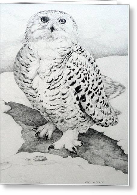 Snowy Owl Greeting Card by Jill Iversen