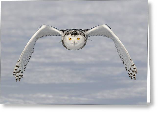 Snowy White Owl Greeting Cards - Snowy Owl Greeting Card by Scott  Linstead