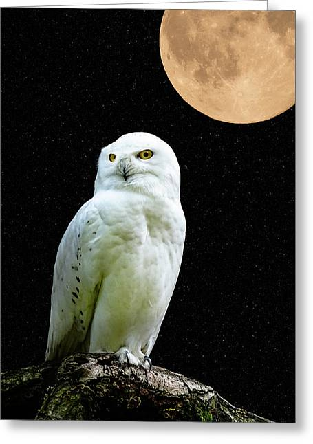 Snowy Owl Under The Moon Greeting Card by Scott Carruthers