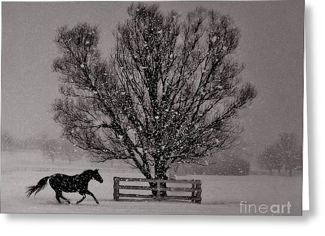 Lone Horse Greeting Cards - Snowy Pasture Gallop Greeting Card by Alexander Gureckis