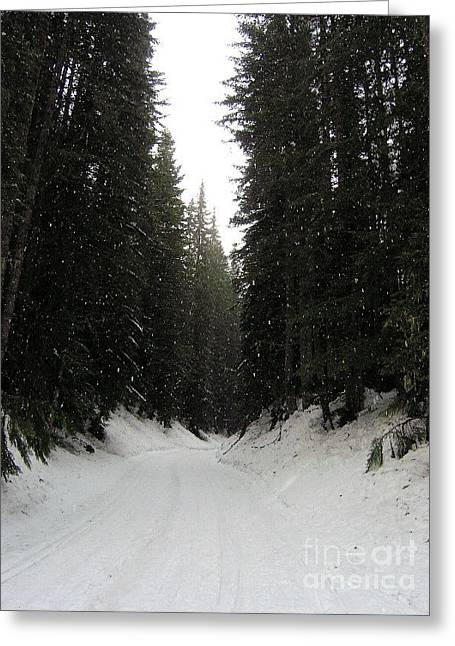Silvie Kendall Photographs Greeting Cards - Snowy Pines Greeting Card by Silvie Kendall