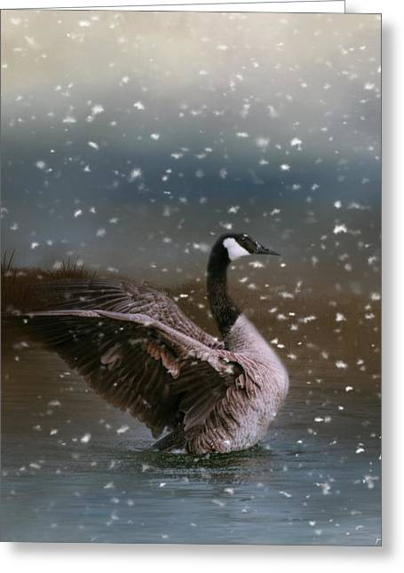Snowy Swim Greeting Card by Jai Johnson