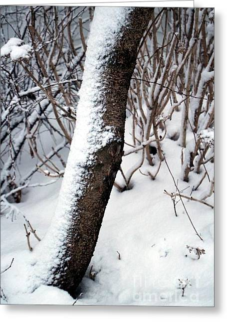 Wintry Greeting Cards - Snowy Tree Bark in the Winter Greeting Card by Jari Hawk