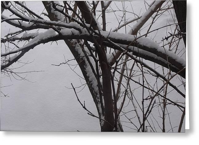 Anna Villarreal Garbis Greeting Cards - Snowy Tree II Greeting Card by Anna Villarreal Garbis