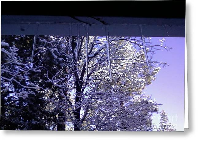 Snowy Trees And Icecicles Greeting Card by Jamey Balester