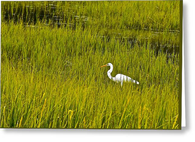 Nature Center Greeting Cards - Snowy White Egret Highlight In The Grass Greeting Card by Joan Kaplan