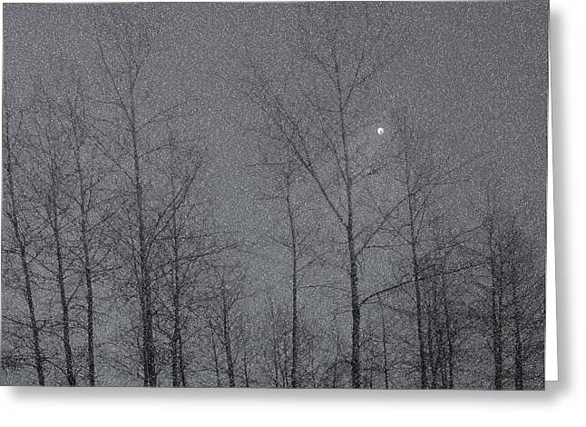 Snowy Evening Greeting Cards - Snowy Winter Night Greeting Card by Marion McCristall